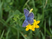 Butterfly blue w yellow flower by Kevin Tuck