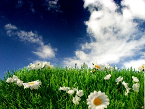 Daisies and Sky by Jay Simmons
