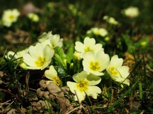 Spring flower.001 by sanja gjenero